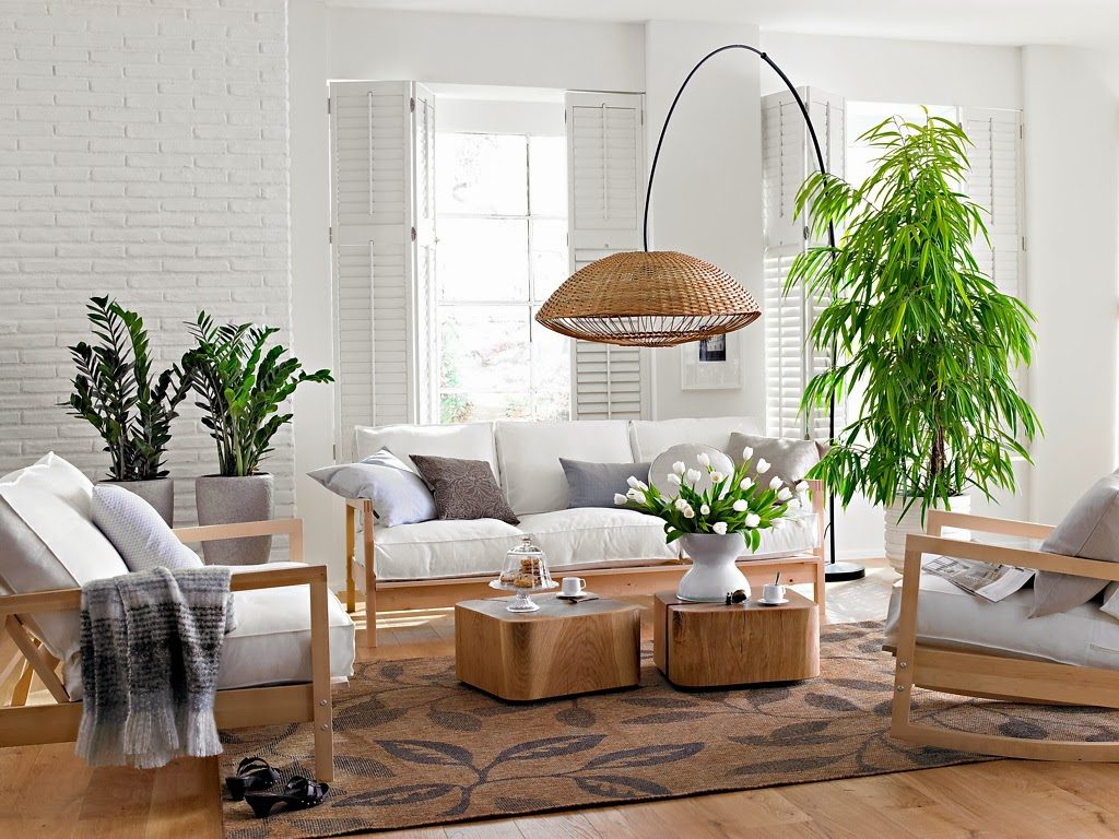 purifica el aire de tu casa con estas plantas que la nasa recomienda