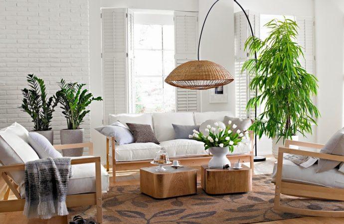 Purifica el aire de tu casa con estas 5 plantas que la NASA recomienda