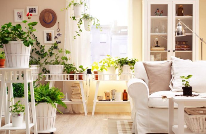 Las mejores plantas para tu hogar